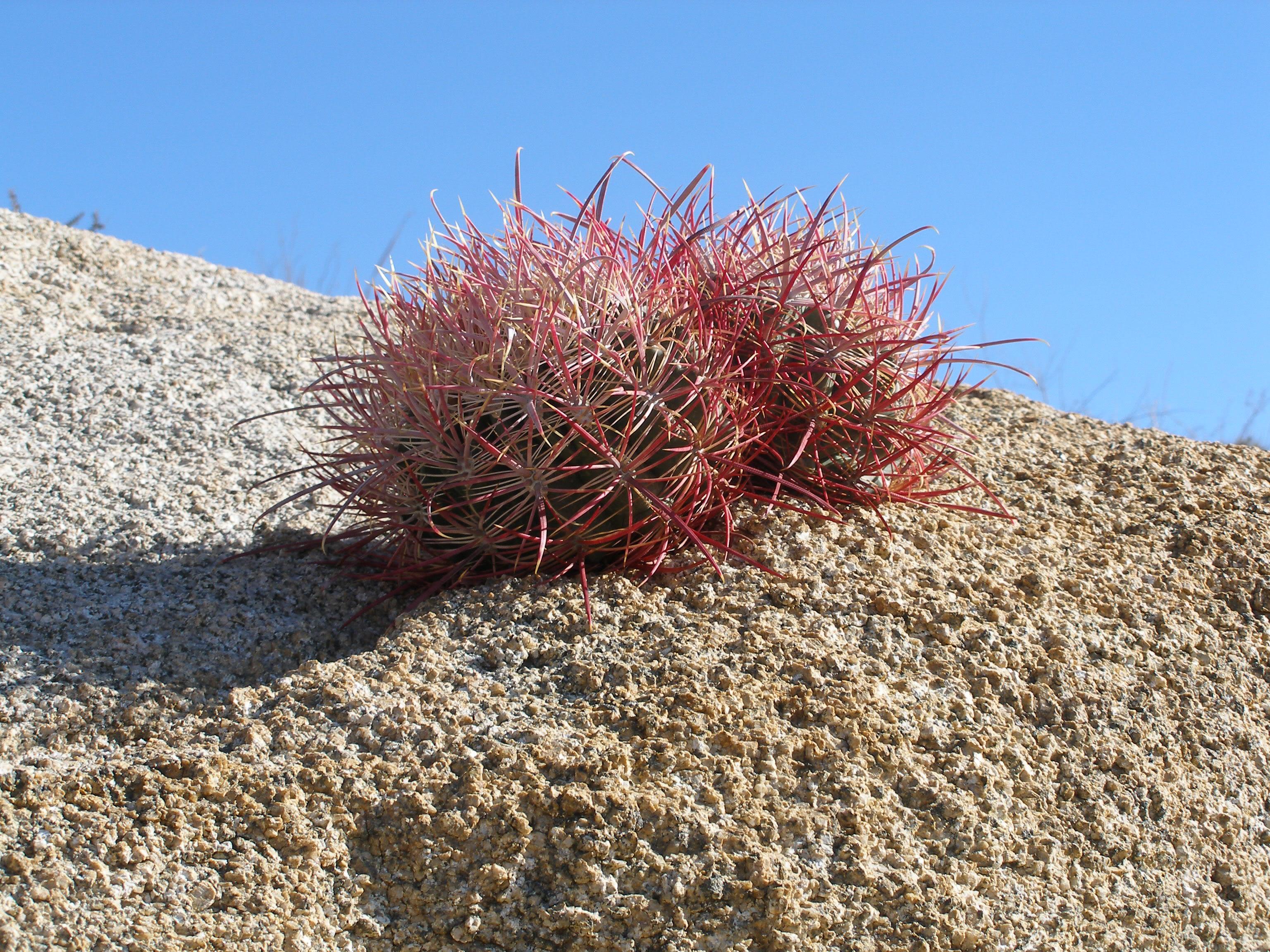 sahara desert plants names