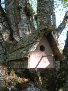 Picture of a bird house illustrating the need to plan for a discipleship movement.